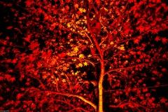 048-Herbstleuchten-Maxipark_I9A3613